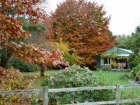 Green Cottage in Autumn