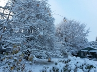 View of Green Cottage in a Snowfall